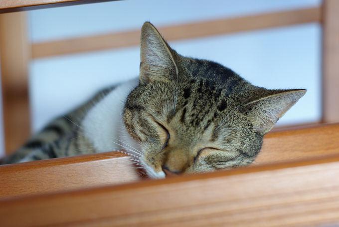 Schlafplätze die dritte (Teil 2)
