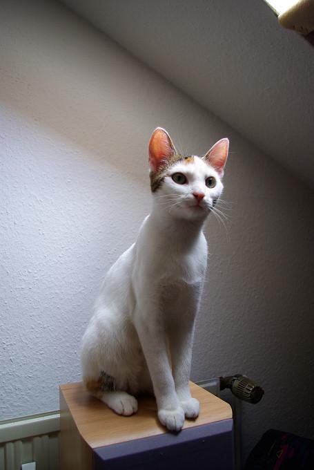 Deko-Boxen-Katze