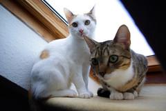 Kiwi und Mogli ohne Streit :-)
