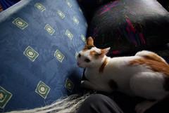 Sofa Spielereien