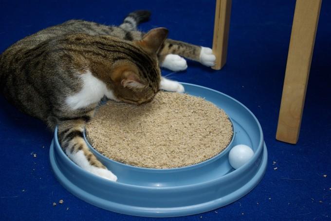 Katzenminze und die Folgen